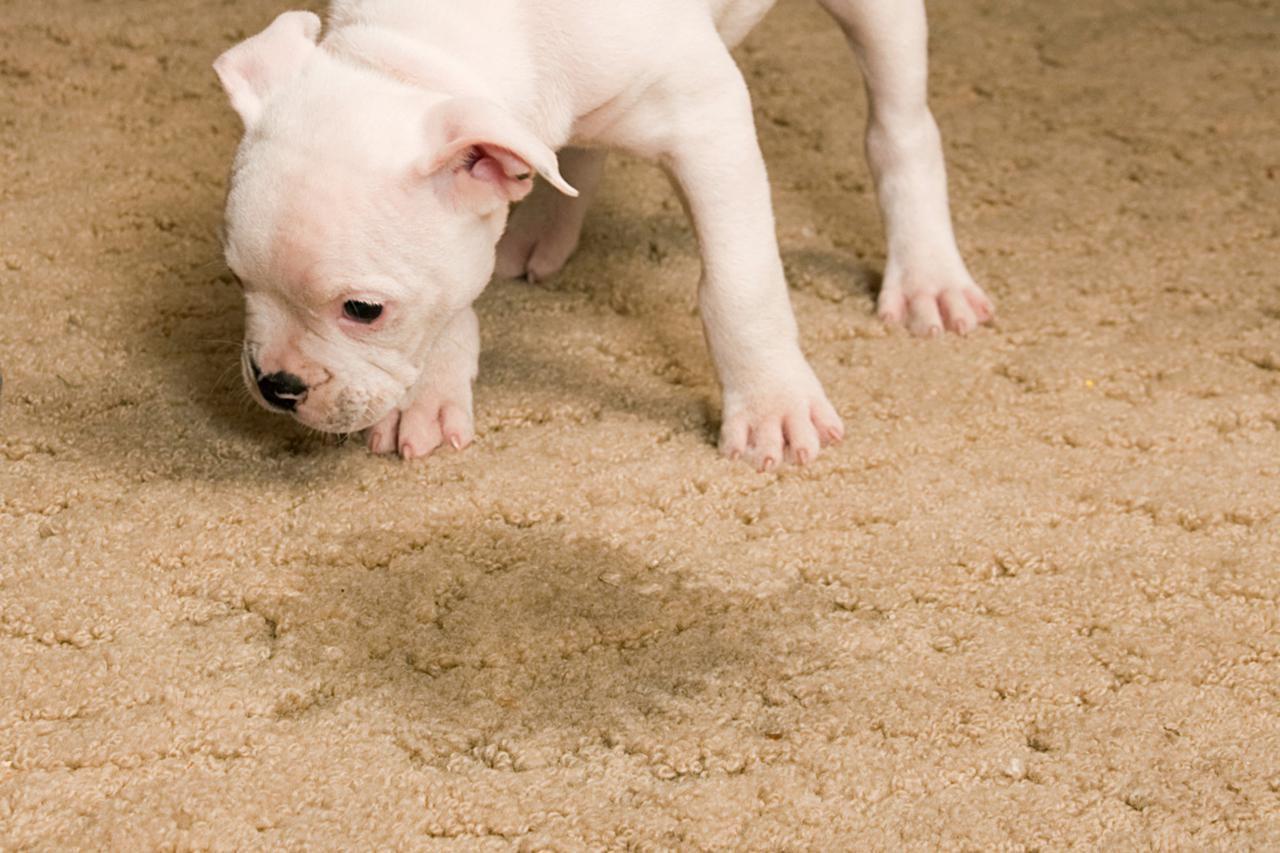Pet Urine Treatment Northern Beaches