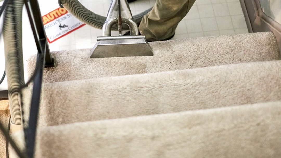 carpet cleaning Northern Beaches