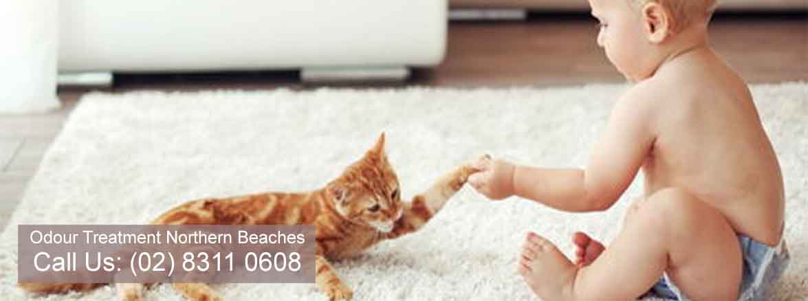 Odour Treatment Services Northern Beaches